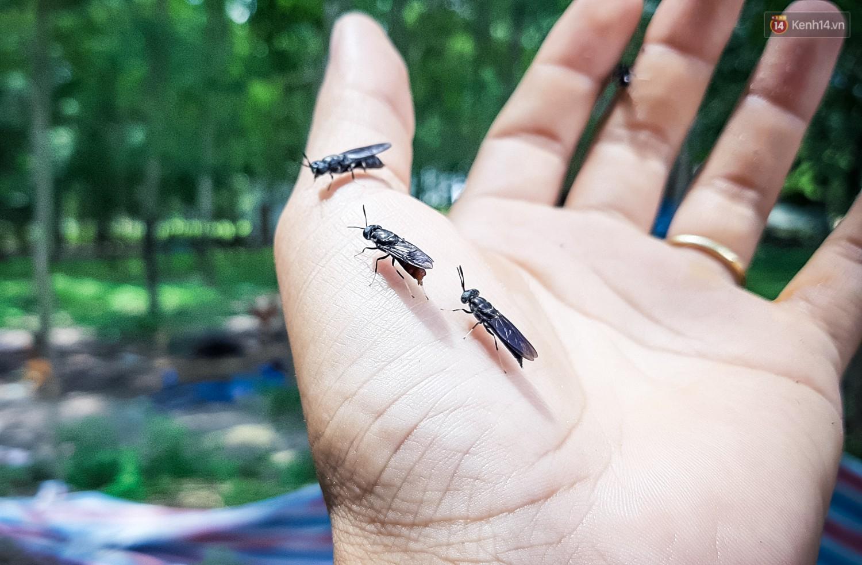 Ảnh 7: Nuôi ruồi kiếm 80 triệu - We25.vn