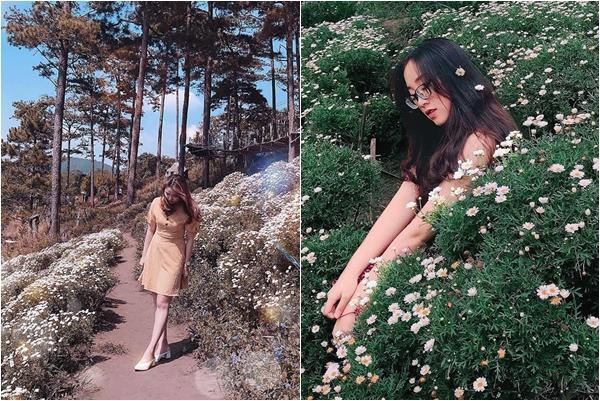 """Triền hoa cúc họa mi trắng tinh khôi đúng độ bung nở khiến """"con dân"""" chỉ muốn đến Đà Lạt ngay và luôn"""