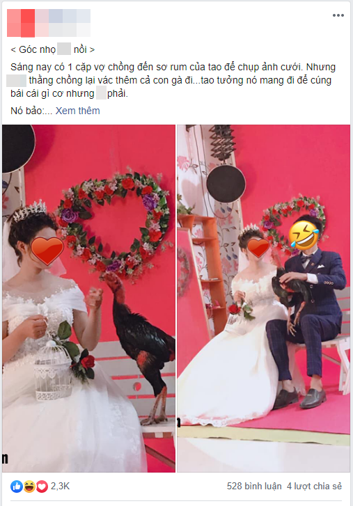 """Cô dâu chú rể vác hẳn gà chọi đi chụp ảnh cưới, studio """"mếu máo"""" dọn """"bãi chiến trường"""" của """"pet cưng"""""""