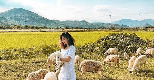 """Đổ gục """"cánh đồng cừu"""" cực chill khiến team sống ảo mê mẩn"""