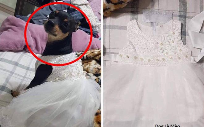 """Nhận váy hộ vợ, chồng tưởng vợ mua tặng chó cưng ai ngờ """"váy em mua chờ con gái đầu lòng chào đời, em có thai rồi""""!"""