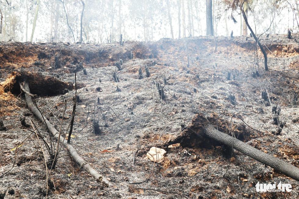 """Hà Tình: Người dân xót xa, bất lực nhìn rừng thông ngập trong """"biển lửa"""""""