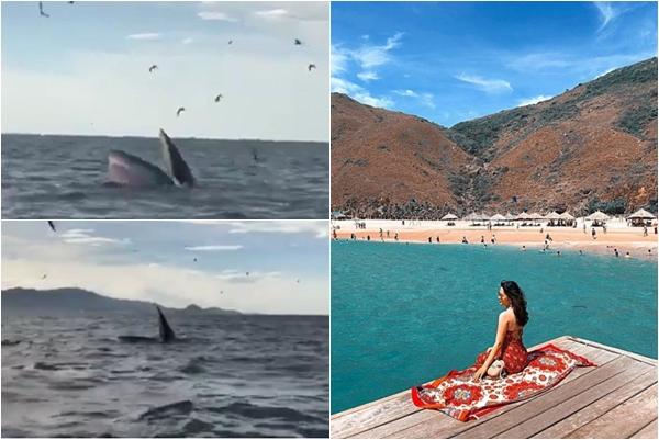 """Thích thú trước hình ảnh """"cá Ông"""" xuất hiện ở biển Quy Nhơn, du khách phấn khích hô vang """"ông ơi"""""""