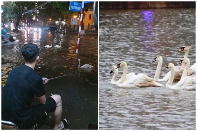 """Trai đẹp """"tựa gối ôm cần"""" chăn thiên nga giữa đêm mưa ngập đường tại Hải Phòng vì sợ dân bắt đi đánh tiết canh"""