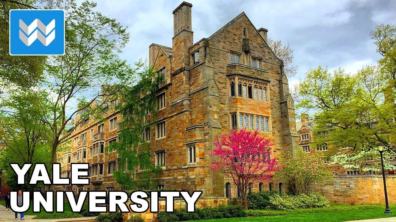 Ảnh 2: Nữ sinh 2k1 trường Ams trúng tuyển Đại học Yale - We25.vn
