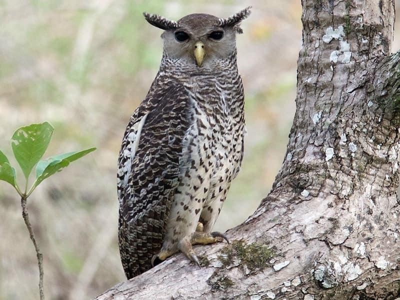 """Đã tìm ra loài chim """"sống ảo"""" nhất năm, vẻ ngoài ngây thơ nhưng khả năng săn mồi đích thị sát thủ"""