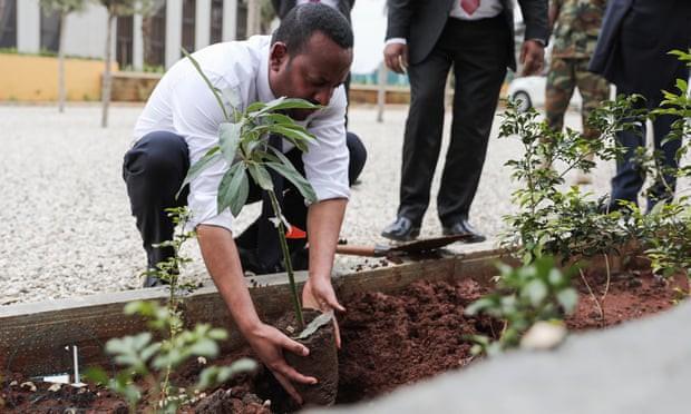 Trong 12 giờ, Ethiopia trồng được 350 triệu cây xanh, lục địa Đen xác nhận thêm kỷ lục mới