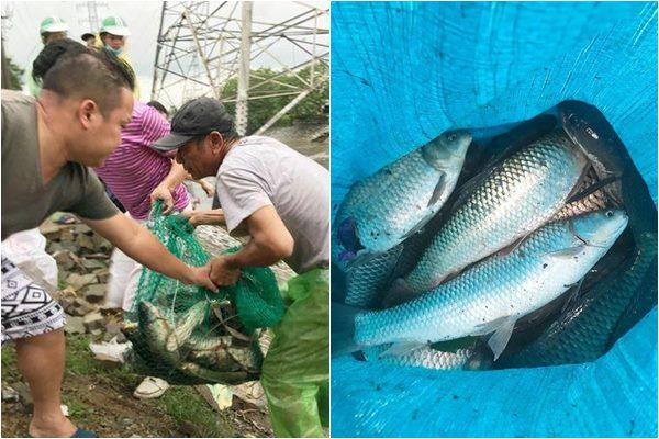 Người dân Hà Nội quăng vó, bắt được hàng chục kg cá sau cơn bão số 3