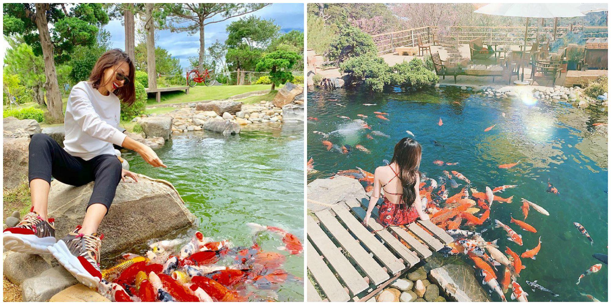"""Kỳ Duyên và Minh Triệu khiến fan """"ngất lịm"""" vì tìm ra tiệm cafe cá Koi đậm chất Nhật Bản giữa lòng Đà Lạt"""