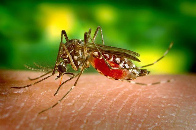 """Nhà hoạt động vì quyền động vật hô hào người dân """"để yên cho muỗi hút máu vì nó còn phải nuôi con"""""""