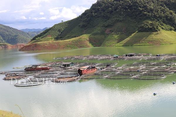 """Ra giữa lòng hồ thủy điện Sơn La xem ngồn ngộn cá """"tàu ngầm"""""""