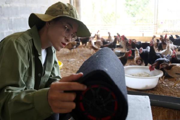 Từ bỏ công sở, nữ kỹ sư mở trang trại gà nghe nhạc giao hưởng thu về trăm triệu đồng mỗi năm