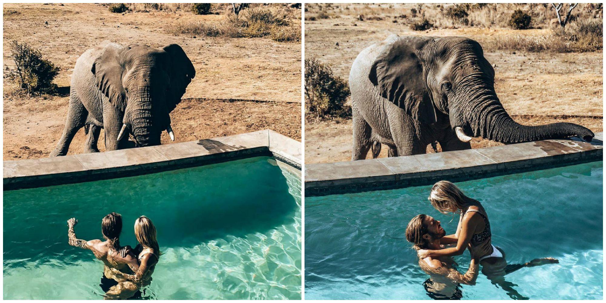 """Trải nghiệm """"khóc thét"""" không dành cho những tín đồ """"yếu tim"""": Tắm hồ bơi cùng voi khổng lồ ở Nam Phi đang """"gây bão"""" CĐM"""