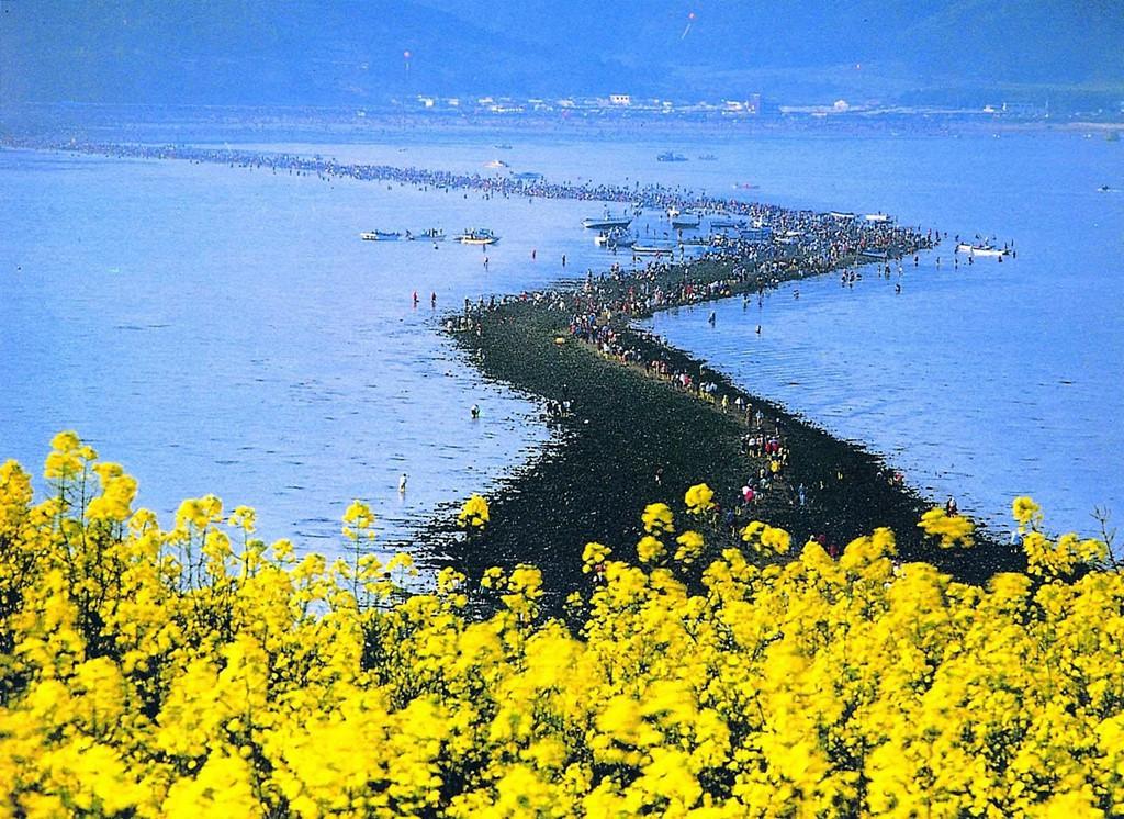 Mắt tròn mắt dẹt trước con đường tách đôi biển chỉ xuất hiện 2 lần cả năm ở Hàn Quốc