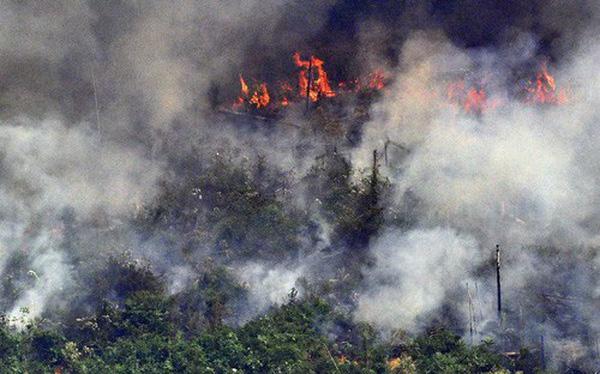 Chuyện gì đang xảy ra với rừng già Amazon, bạn có thể làm được gì để cứu nó?