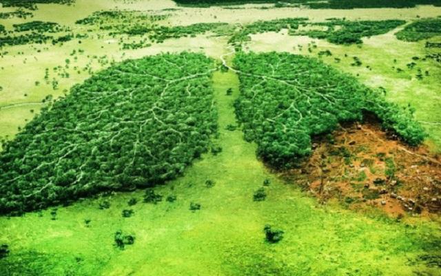 Để cứu lấy rừng Amazon và thoát khỏi nguy cơ diệt chủng, nhân loại chỉ còn cách... ăn chay