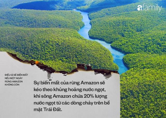 Ảnh 2: Nếu rừng Amazon biến mất - We25.vn