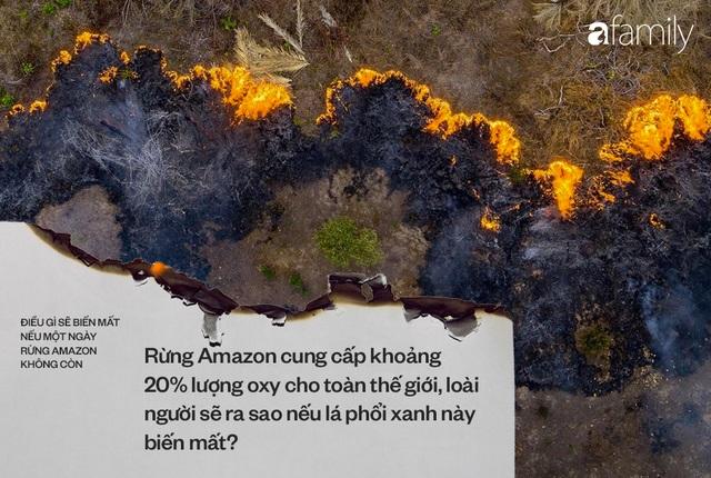 Ảnh 3: Nếu rừng Amazon biến mất - We25.vn