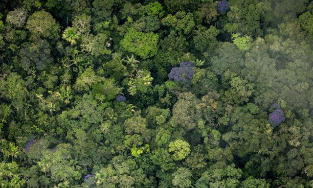 Ảnh 4: Nếu rừng Amazon biến mất - We25.vn