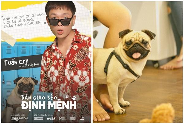 """Bị Shiba Inu cướp vai Cậu Vàng, Pug Chíp Bom hóa đặc vụ mật trong series trinh thám """"Bản giao kèo định mệnh"""""""