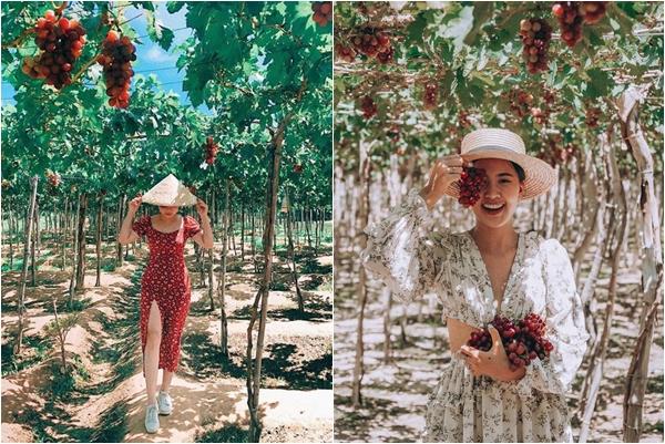 """Rủ nhau tháng 9 đi """"săn"""" 2 VƯỜN NHO nổi tiếng nhất Ninh Thuận: Khi đi """"sống ảo,"""" lúc về no căng bụng nho"""