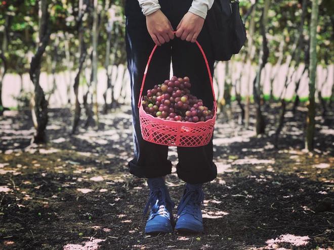 """Tháng 9 đổi gió """"săn nho"""" tại 2 khu vườn nổi tiếng nhất Ninh Thuận để lúc đi có hình sống ảo, lúc về có nho ăn! - Ảnh 12."""