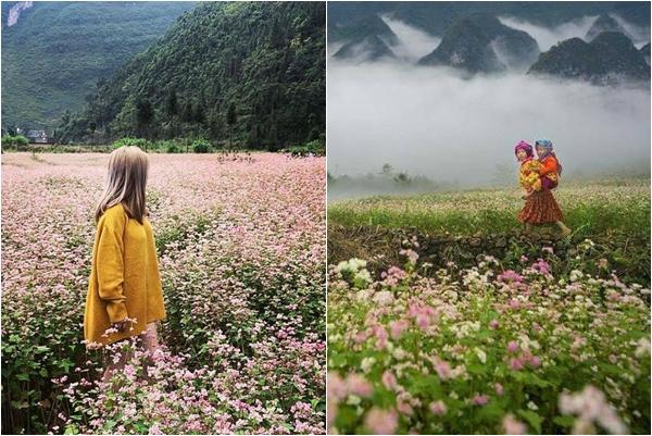 Tháng 10 này, lên Hà Giang ngắm mùa tam giác mạch nở trên đá đẹp tới nức lòng