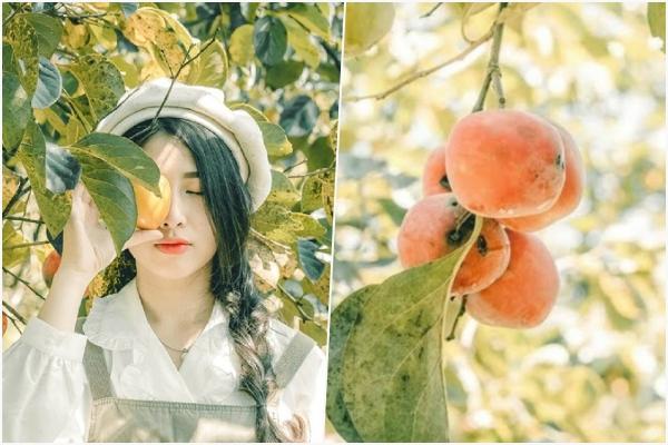 Lưu gấp địa chỉ VƯỜN HỒNG CỔ TÍCH đẹp như mơ giữa Đà Lạt để có ngay 1 bộ ảnh Hàn Quốc
