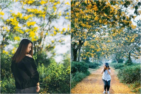 """""""Đây mùa thu tới"""" có một mùa muồng vàng đẹp xiêu lòng ở """"phố núi"""" Gia Lai"""