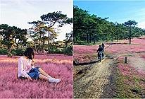 Mới giữa tháng 10 mà đồi cỏ hồng Đà Lạt đã xuất hiện làm triệu triệu con tim xao xuyến