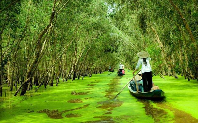 """008 20191027231921 - Thu này, """"đẩy thuyền"""" đu đưa về rừng tràm Trà Sư mùa nước nổi đẹp quên lối về"""