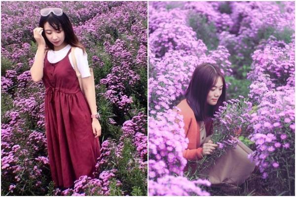 """Đà Lạt lại """"thả thính"""" người ta bằng mùa hoa thạch thảo tím cả một khoảng trời"""