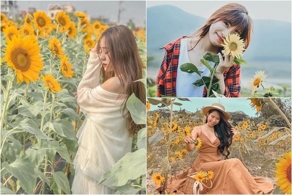 Đến hẹn lại lên, Cánh đồng Hoa Hướng Dương ngay trong lòng Hà Nội đã bung hoa vàng rực rỡ