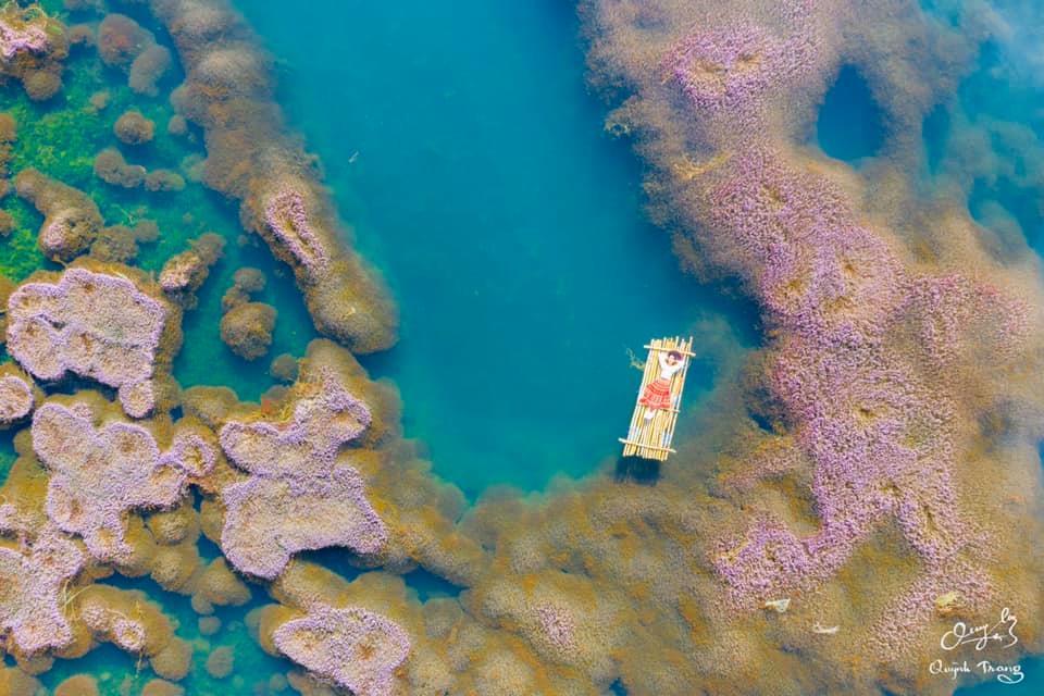 Tìm ra thiên đường HỒ TẢO HỒNG đẹp như nước Úc ở ngay Bảo Lộc