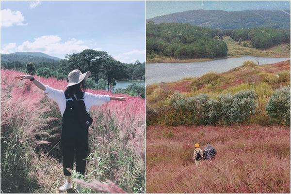 """""""Siêu phẩm"""" Đà Lạt tháng 11 còn có """"Đồi cỏ hồng đuôi chồn"""" đẹp tựa xứ sở Nhật Bản"""