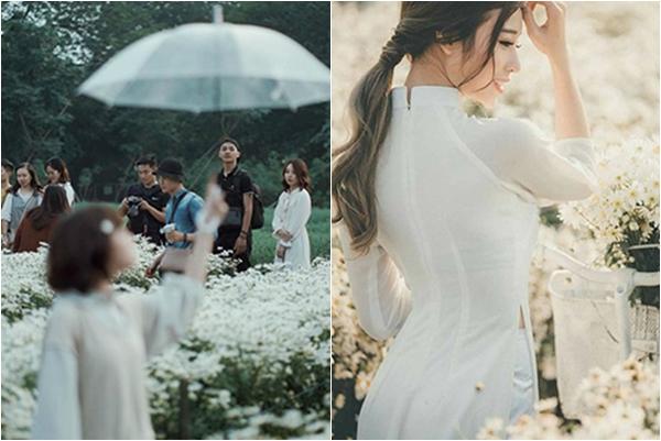 """Khung cảnh """"đông nghịt"""" mùa cúc họa mi Hà Nội dịp cuối tuần: Một mét vuông 1001 cặp chụp ảnh """"sống ảo"""""""