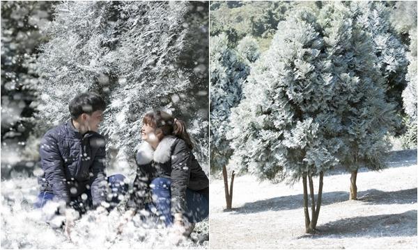 Rỉ tai nhau lên Ba Vì ngắm khu vườn tuyết rơi đẹp như trời Âu mùa Giáng sinh này