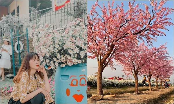 Chẳng cần đợi mùa nữa, Hà Nội xuất hiện thung lũng hoa 4 mùa đẹp ngây ngất rồi!