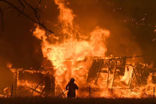 Những hình ảnh đau lòng của đại thảm họa cháy rừng Úc: Gần nửa tỷ sinh vật bị thiêu rụi
