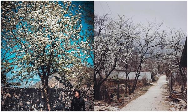 """Hóa ra, mùa đẹp nhất """"nơi đá nở hoa"""" Hà Giang là mùa xuân đang về trên cao nguyên"""