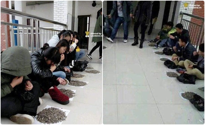 """""""Hết hồn"""" sinh viên cắn hướng dương trong giờ học bị thầy phạt cắn hết 50 kg hạt hướng dương"""