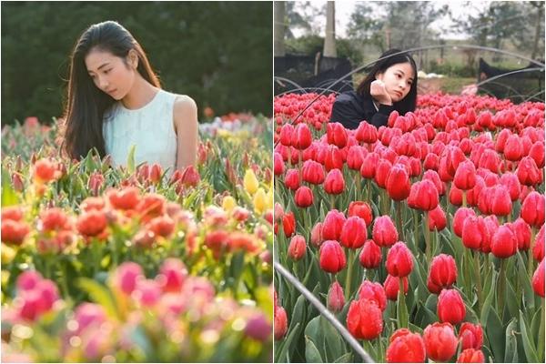 """Xuất hiện vườn hoa Tulip sát xịt Hà Nội, """"free vé"""" tha hồ sống ảo vào dịp Tết 2020"""