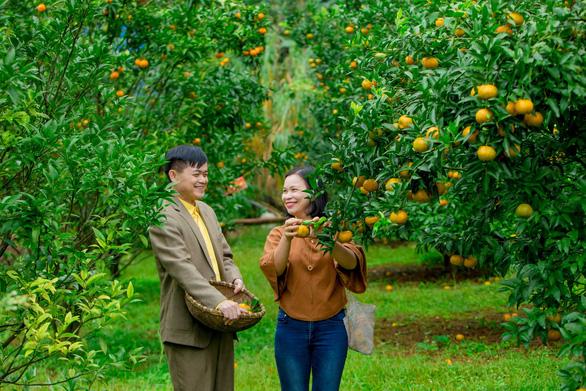 Phát hiện Vườn cam trĩu quả đang vào mùa ở Đà Lạt, đứng vào thôi cũng có ngay ảnh đẹp