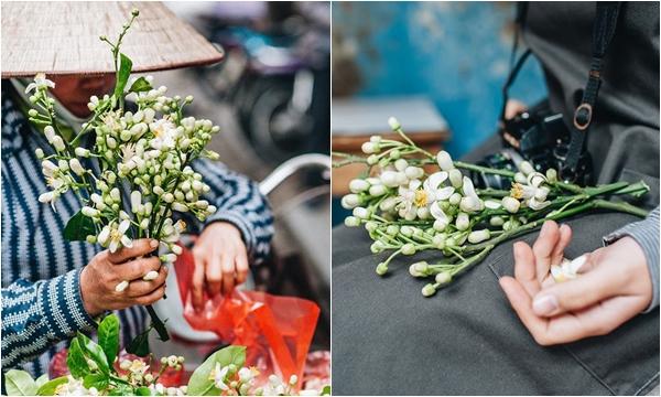 Tháng 2 gọi về mùa hoa bưởi nồng nàn trên những con phố Hà Nội
