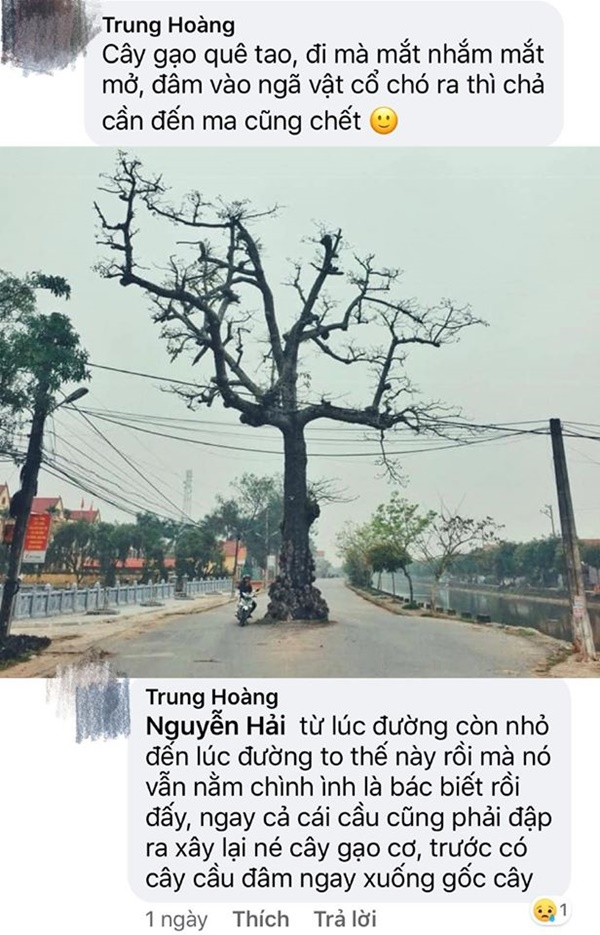 Cư dân mạng bỗng đổ xô khoe cây cổ thụ làng mình, chỉ cần đứng vào là có ảnh đẹp