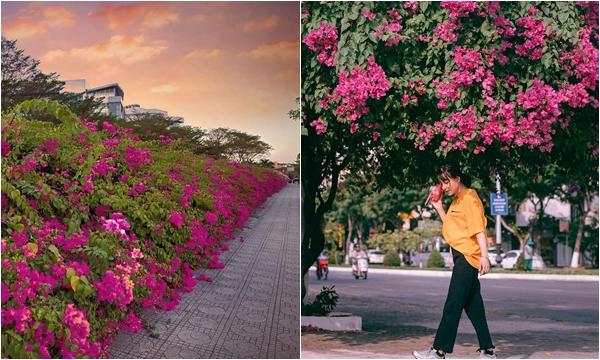 Check-in sương sương Con đường hoa giấy đang nở rực rỡ ngay Sài Gòn cũng có ngay ảnh đẹp
