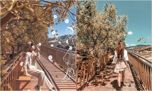 """Siêu HOT """"con đường Hàn Quốc"""" ngay Đà Lạt lên hình bao đẹp khiến giới trẻ điêu đứng"""