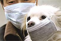 Chú chó đầu tiên trên thế giới dương tính với virus Corona: Nên đeo khẩu trang cho thú cưng khi đi ra ngoài