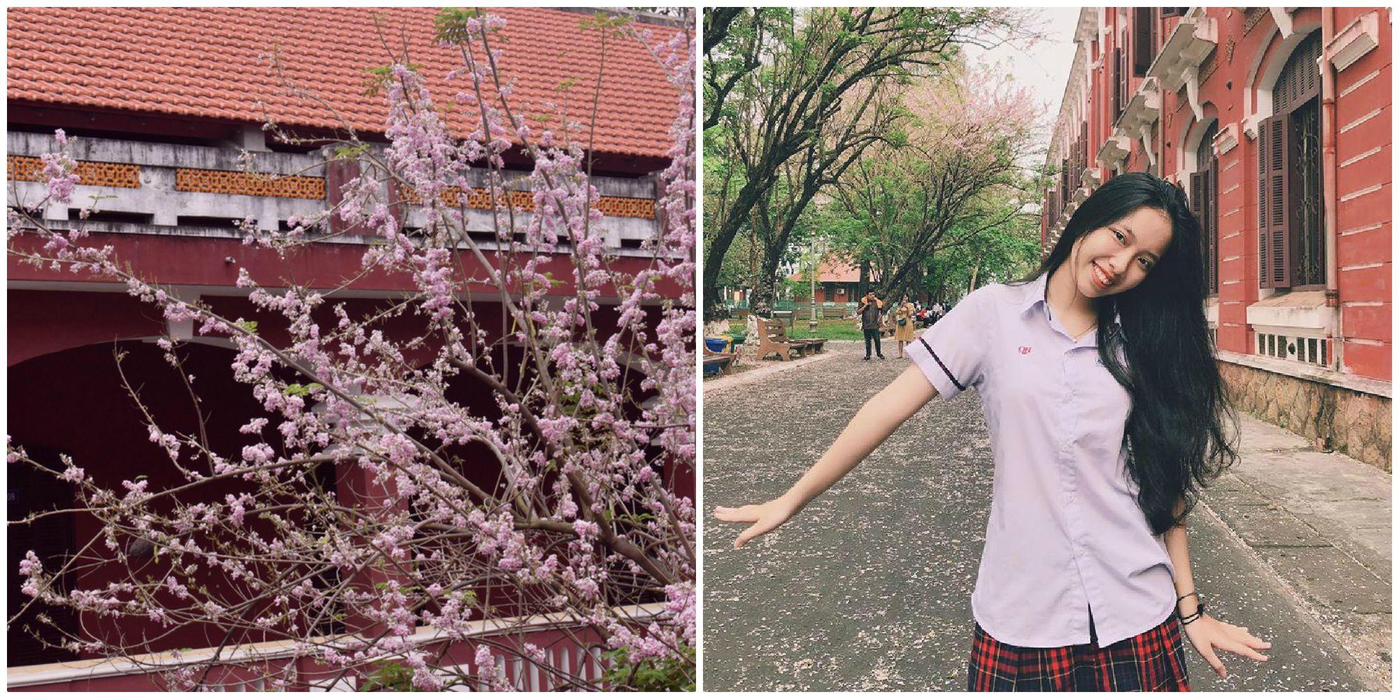 Ghé xứ Huế mộng mơ tháng 3 này để đắm mình vào sắc điệp anh đào đẹp tựa Nhật Bản