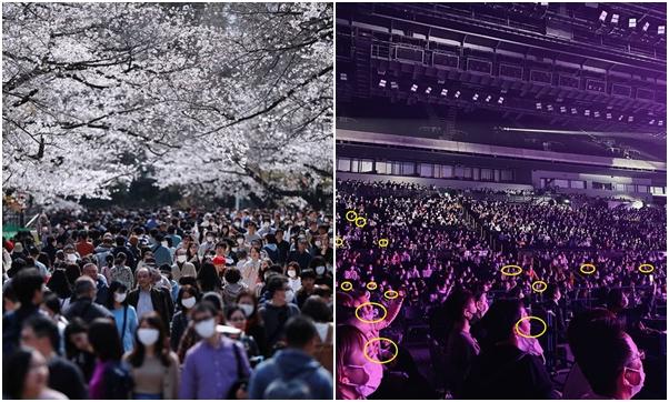 Giữa Covid-19, hàng ngàn người dân Nhật vẫn tụ tập ngắm hoa anh đào và xem kickboxing